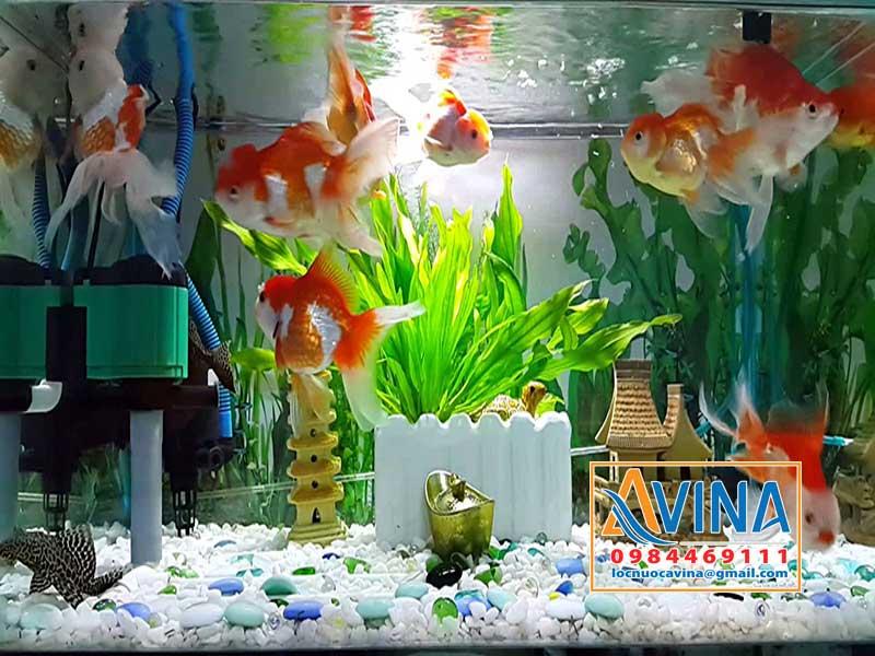Độ pH của nước nuôi cá cảnh